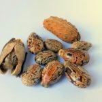 Семена клещевины - из чего делают касторовое масло